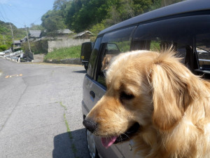 小阪地区では犬や猫ちゃんがお出迎え