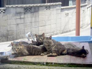 小阪地区では犬や猫のお出迎え