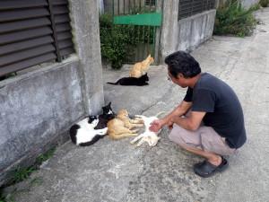 男木島のネコ