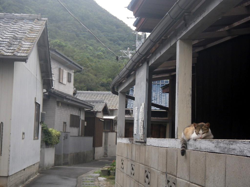 佐柳島のネコ
