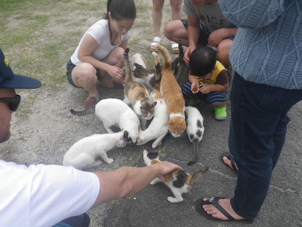 佐柳島本浦のネコ
